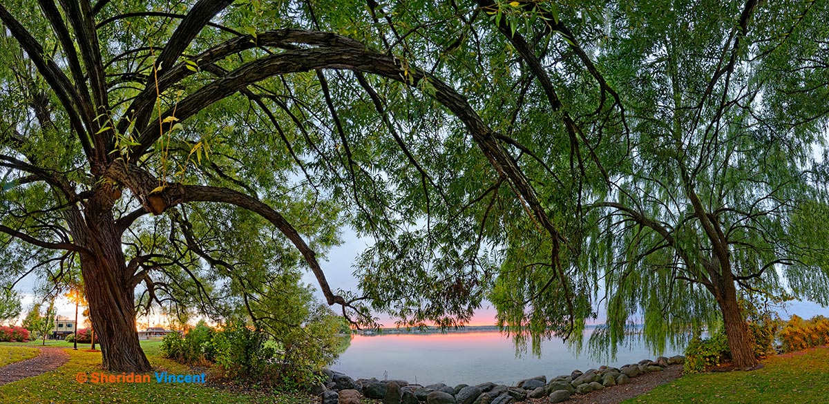 Willows: Canandaigua Lake Sunrise by Sheridan Vincent