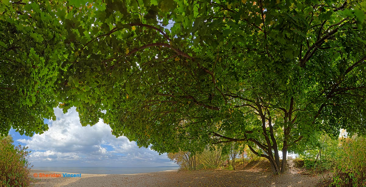 Maple Durand Eastman Beach by Sheridan Vincent