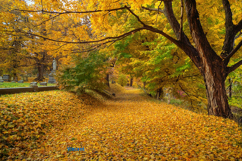 Yellow Leaf Road by Sheridan Vincent